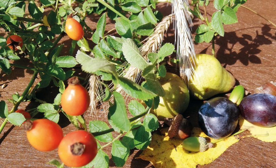 Herbstliche Speisekarte © Ott-Seelow